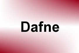 Dafne name image