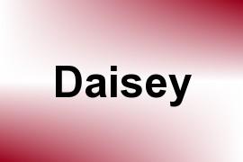 Daisey name image