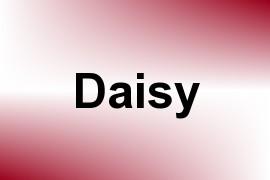 Daisy name image