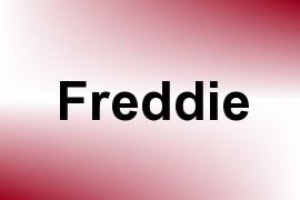 Freddie name image