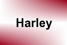 Harley name image