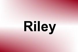 Riley name image