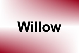 Willow name image